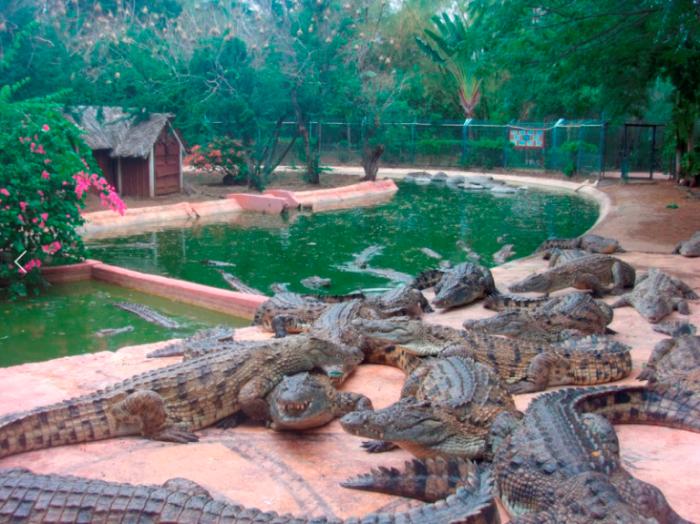 le parc aux crocodiles